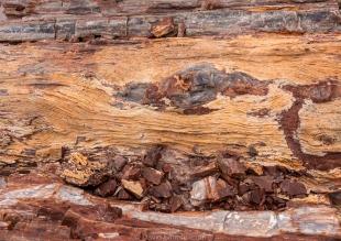 Wood grain in a pretrified log, Jasper Forest hike, Petrified Forest National Park, Arizona