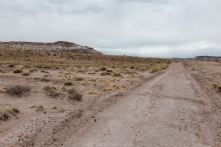 Main access road until the 1960s, Jasper Forest hike, Petrified Forest National Park, Arizona