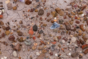 Pebbles and quartz spread over the mud, Jasper Forest hike, Petrified Forest National Park, Arizona