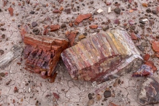 Lots of red in petrified wood, Jasper Forest hike, Petrified Forest National Park, Arizona