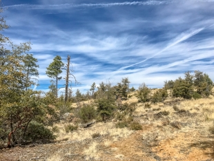 Grass and sky, Trail 396, Prescott National Forest, Arizona