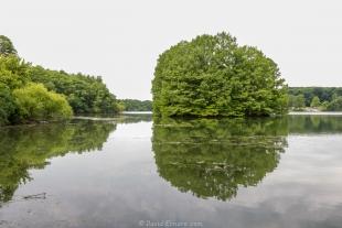 Island in Lake Dawson, Moraine View State Park, Ellsworth, Illinois