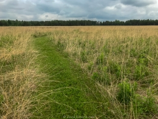 Prairie grasses, Prairie Wildflower Trail, Lake Wissota State Park, Chippewa Falls, Wisconsin