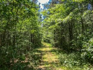 Jack Pine Trail, Lake Wissota State Park, Chippewa Falls, Wisconsin
