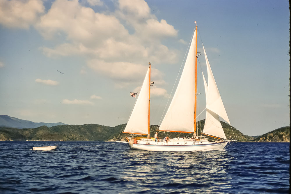 Dovekie - Virgin Islands - February 1978