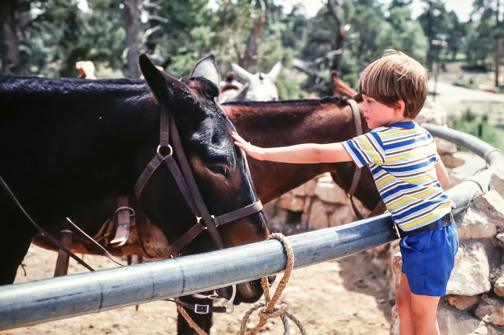 Andrew meets the mules - May 1979