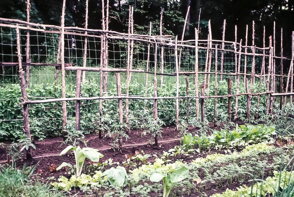 1980 Bill's garden