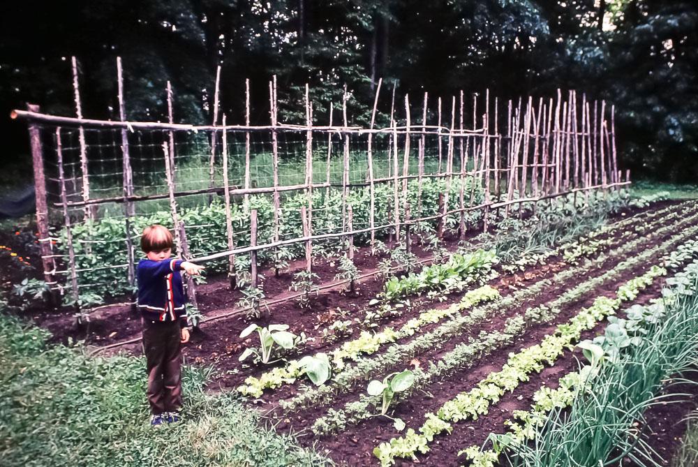 Island garden - June 1980
