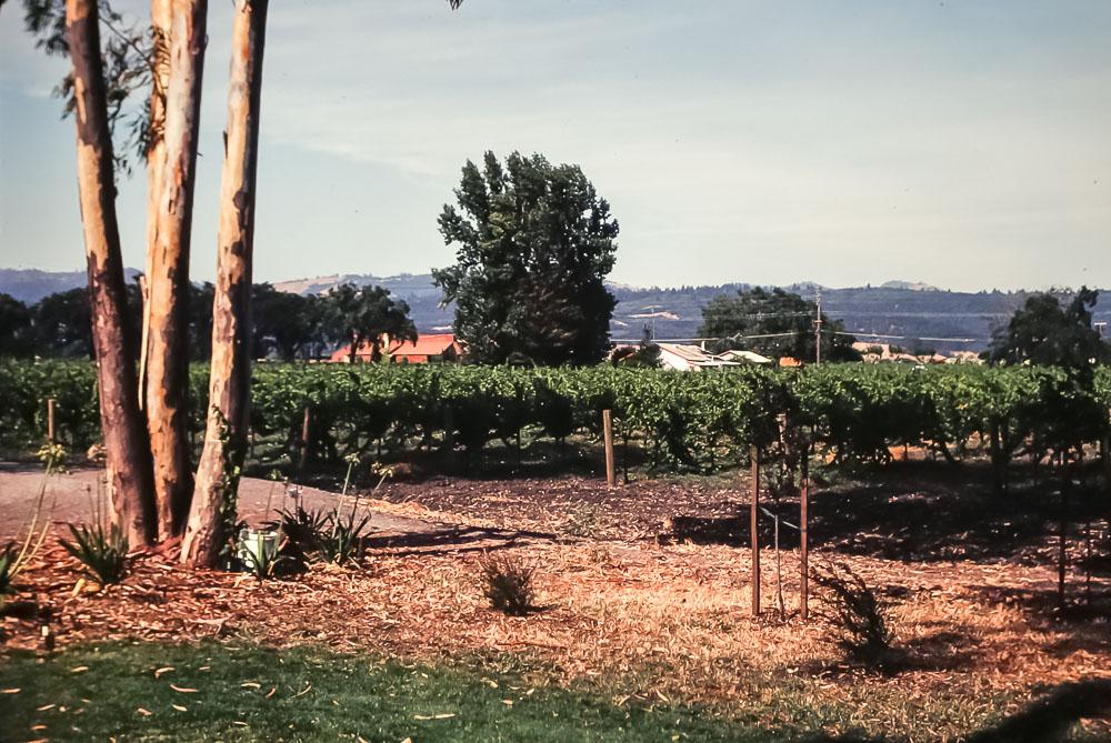 1980 Napa Valley