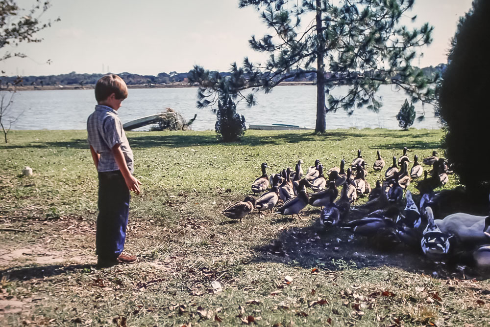 Thornton and Lou's geese and ducks - November 1980