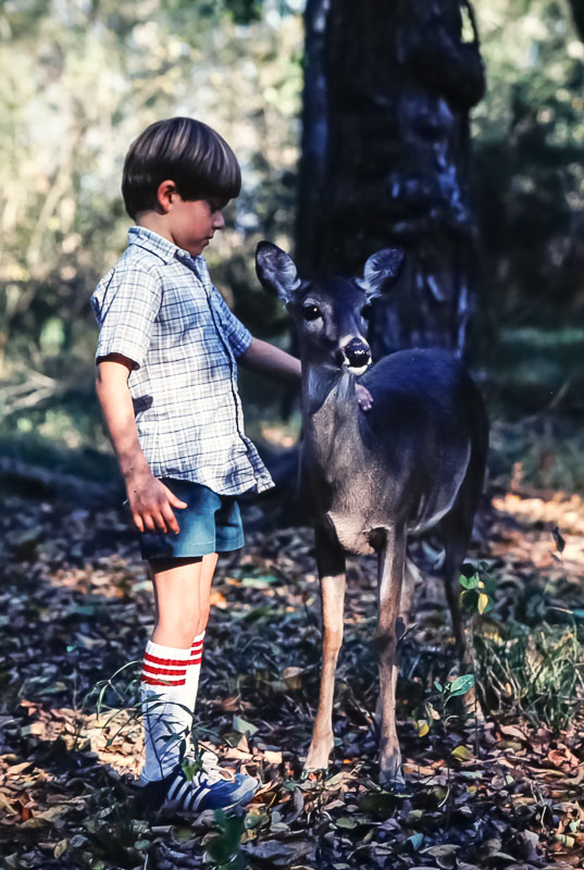 1980 Andrew with very tame deer