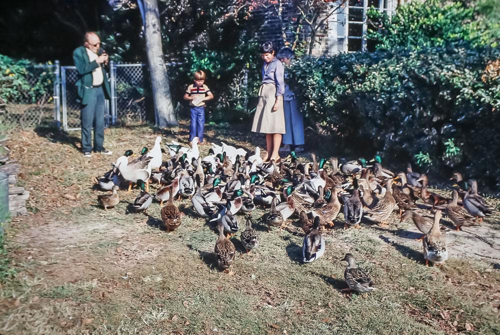 Feeding the birds - November 1980