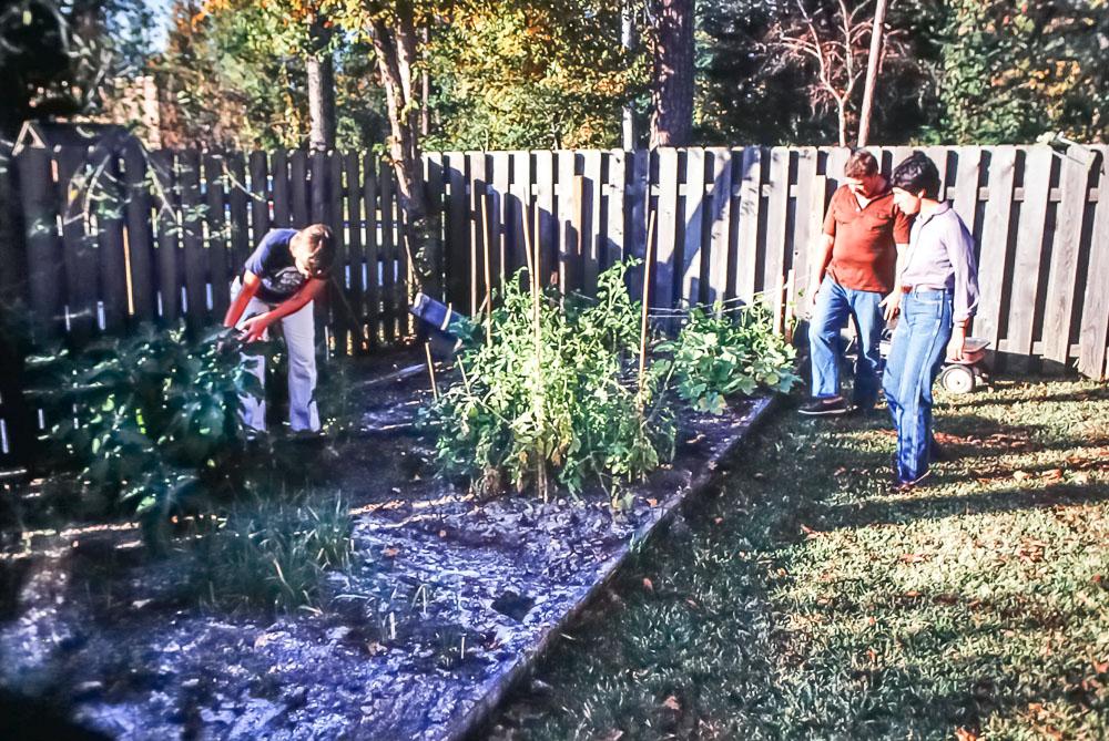Veggie garden at Miller home - Kingwood, Texas - November 1980