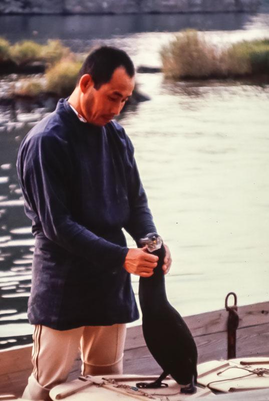 1982 Fishing Cirmorant