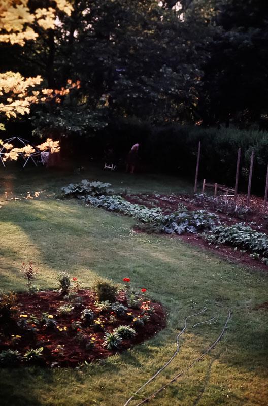 Danforth garden 1984