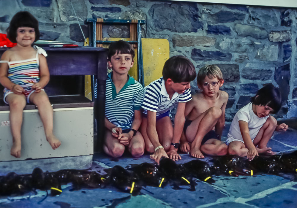 Lobster races - Sarah Diamond, Steven, Andrew, David and Hannah Kapell - July 1985