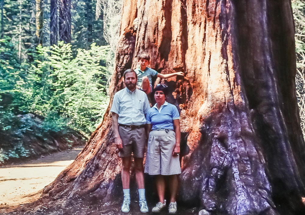 Mariposa Grove - 1985