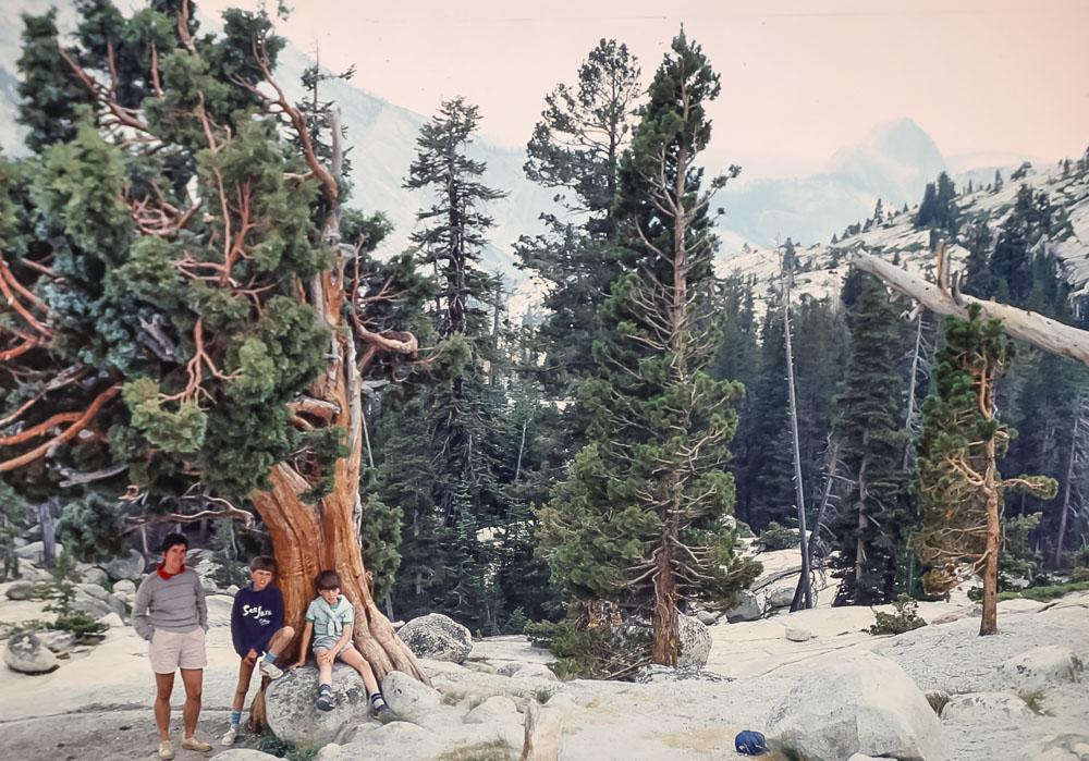 Bristle Cone pines  - Yosemite - July 1985