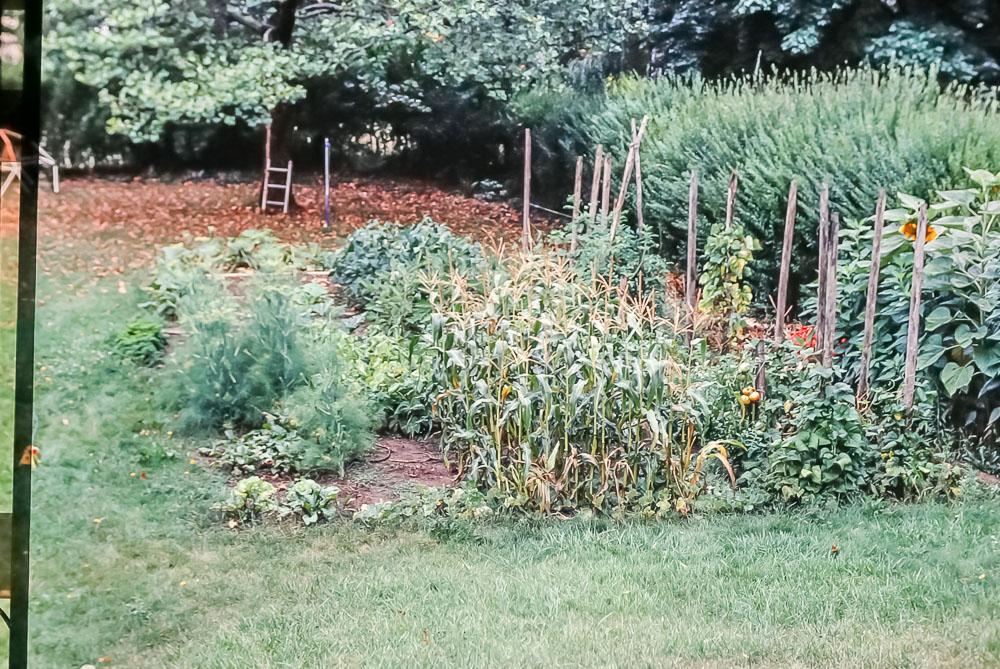 1985 Danforth garden