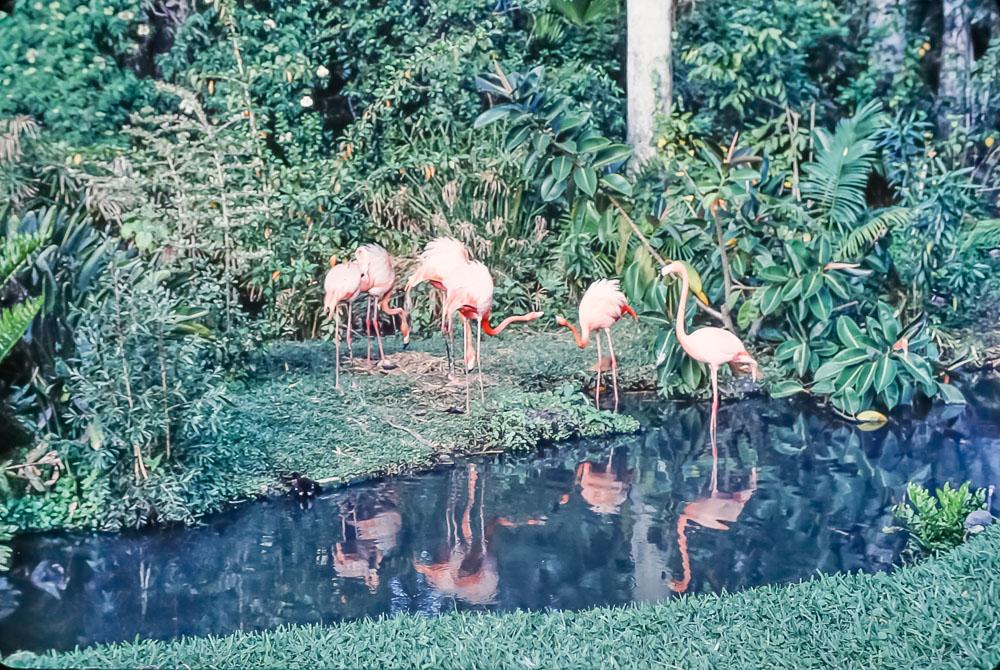 Busch Gardens - March 1986