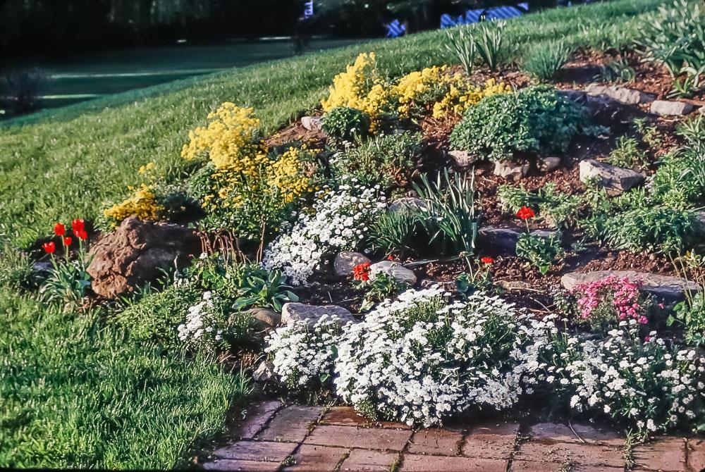 Danforth Crescent flowers - June 1986