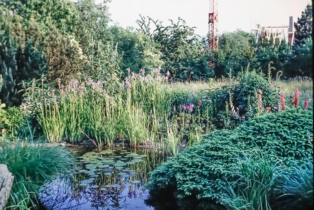 Wolfli's yard, June 2986
