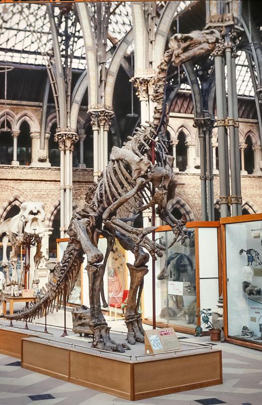 Oxford University Museum of Natural History, June 2986