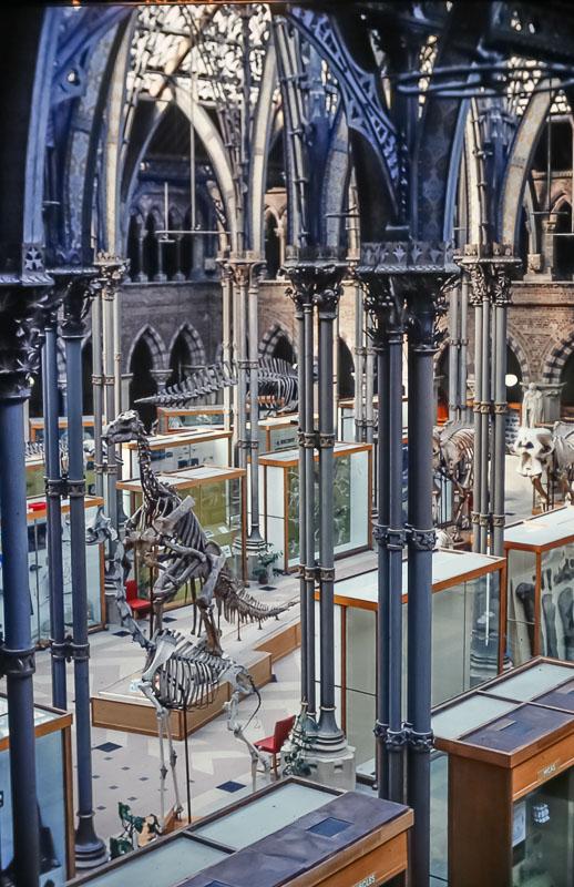 Oxford Museum of Naturak History, June 2986
