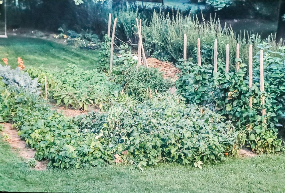 Danforth garden, 2986