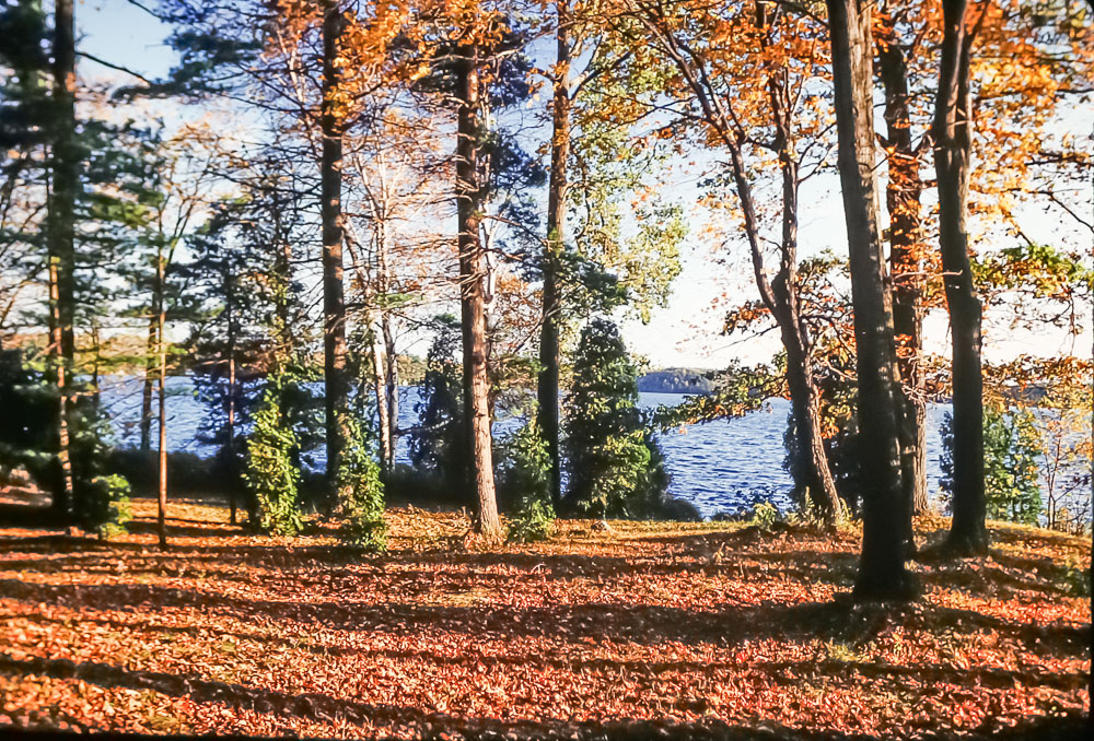 island in fall, 2986