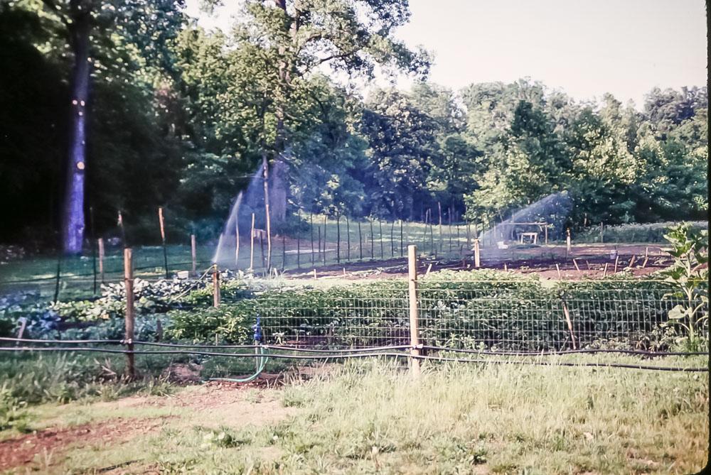 1992 Garden
