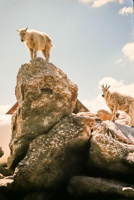 1994 Mt Evans