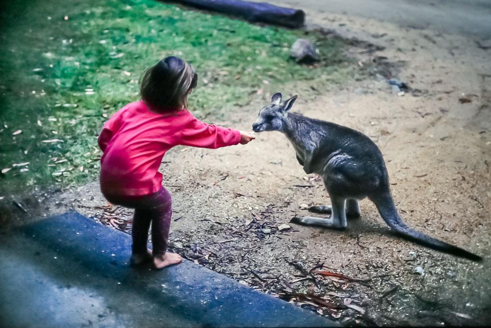 1996 Amanda feeding the kangaroos on Mt. Kosciuszko