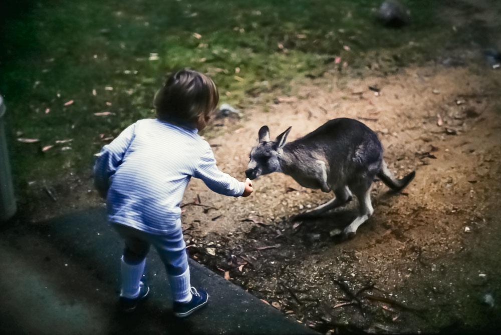 1996 Emily feeding the kangaroos on Mt. Kosciusko