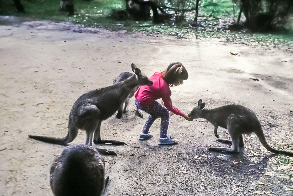 1996 Amanda feeding the kangaroos on Mt. Kosciusko