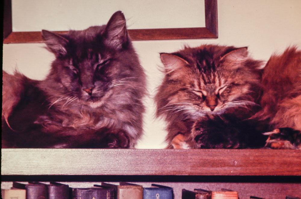 1969 Grey boy and Gladys