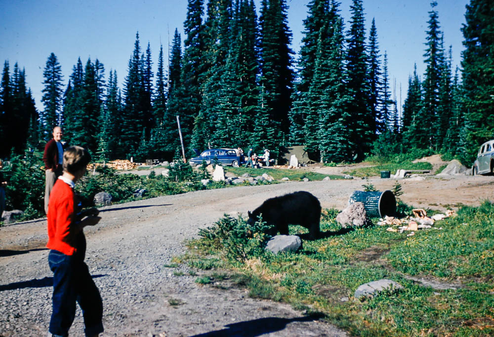 1953 Pre bear proof  garbage cans