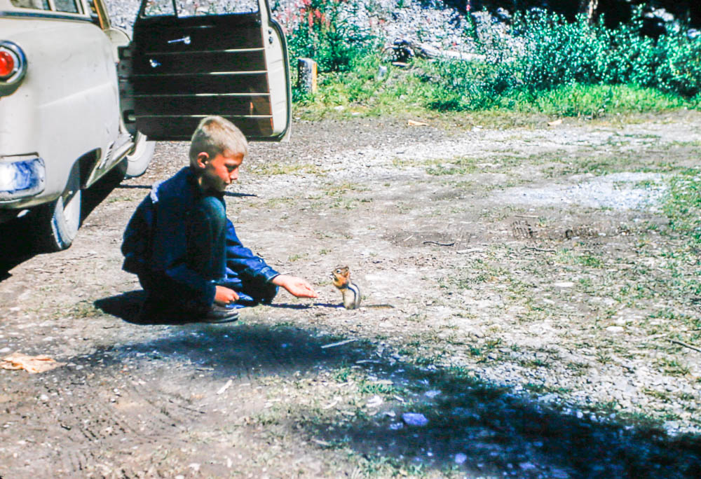 1953 David feeds a chipmunk