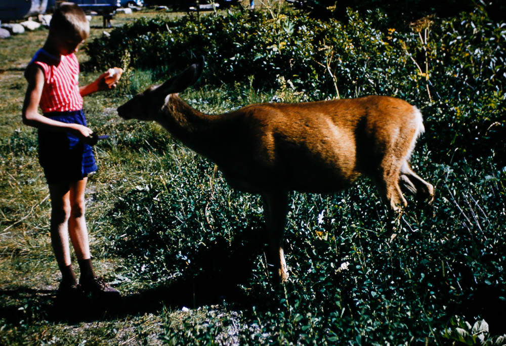 1956 Liz feeds the wildlife