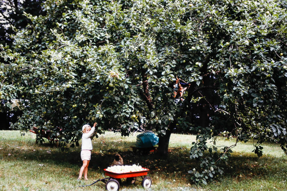 1974 Page picking apples at the Island
