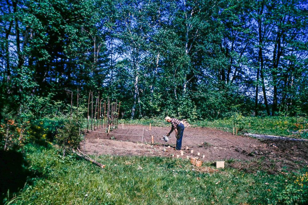1966 Bill planting the garden