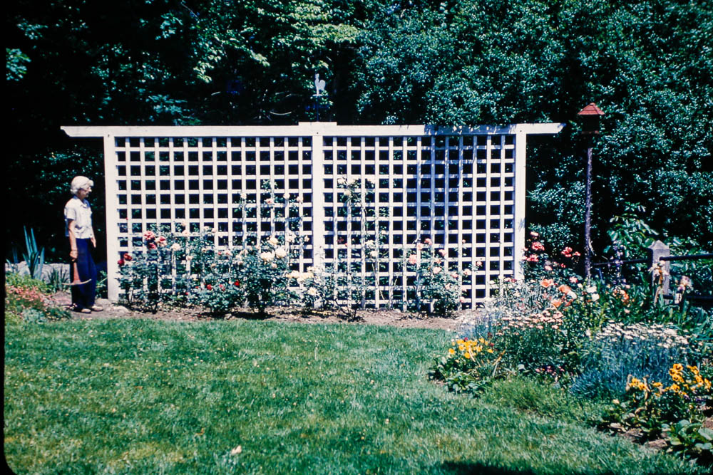 1948 Granny's garden