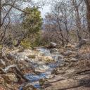 Smith Spring Trail