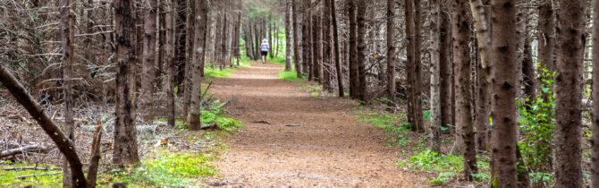 Farmlands/Bubbling Springs Trail