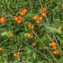 Prairie Wildflower Loop